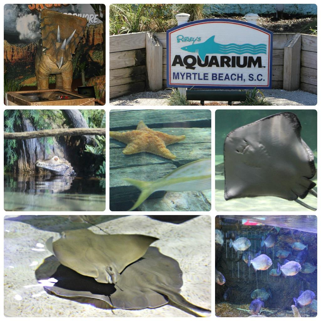 ripleys aquarium in myrtle beach