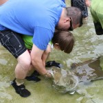 Stingray Encounter at SeaWorld