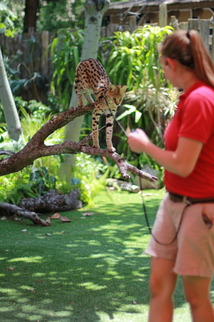 dallas zoo trainer experience
