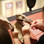 Family Fun at the Perot Museum