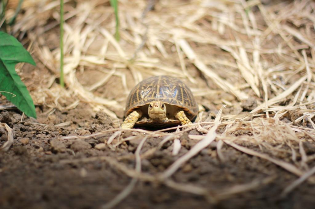 perot museum turtle