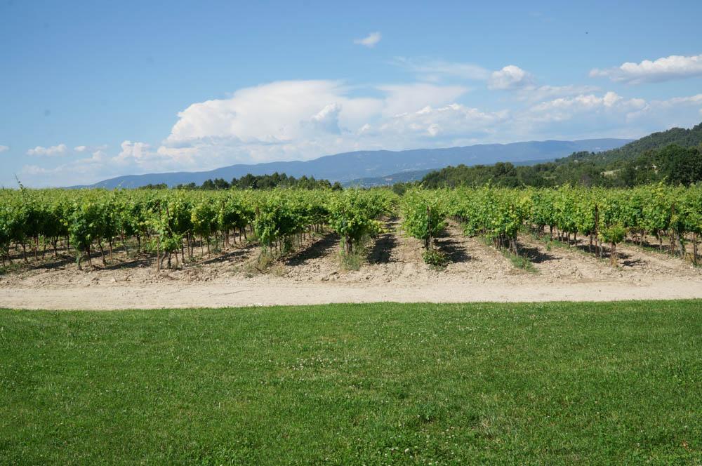 chateau la coste vineyard in aix en provence france