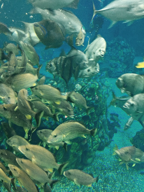 10 Facts I Learned at EPCOT's Living Seas
