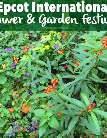 Visit the EPCOT International Flower & Garden Festival until May 17th.