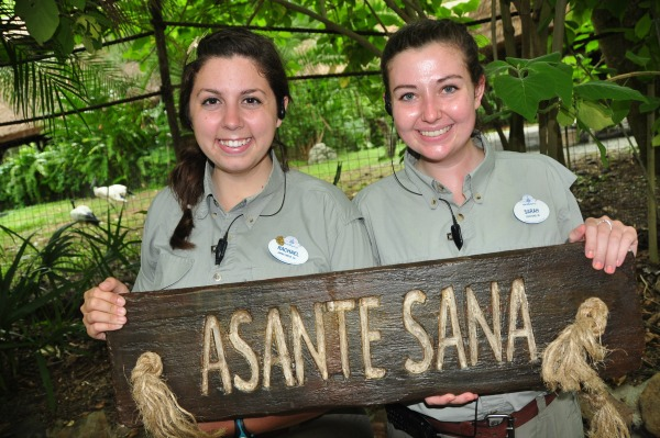 Experience the Wild Africa Trek at Animal Kingdom at Disney World.
