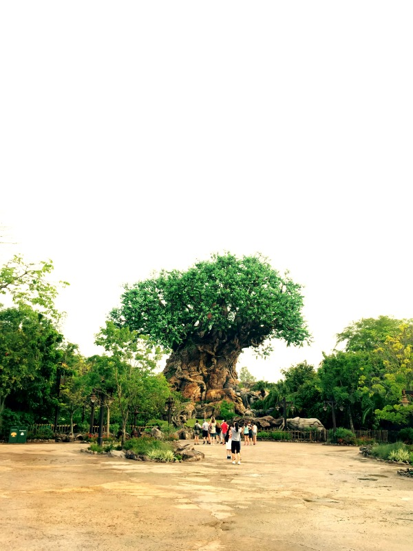 Next time you visit Disney, make sure you book the Backstage Tales Tour at Animal Kingdom.