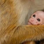 monkey kingdom Kip