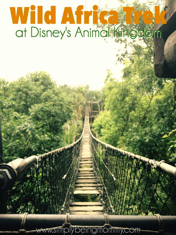 Experience a behind-the-scenes look at the animals on the Wild Africa Trek at Animal Kingdom.