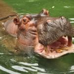 Wild Africa Trek at Animal Kingdom