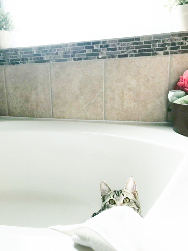 a grey and black kitten in a large white bathtub