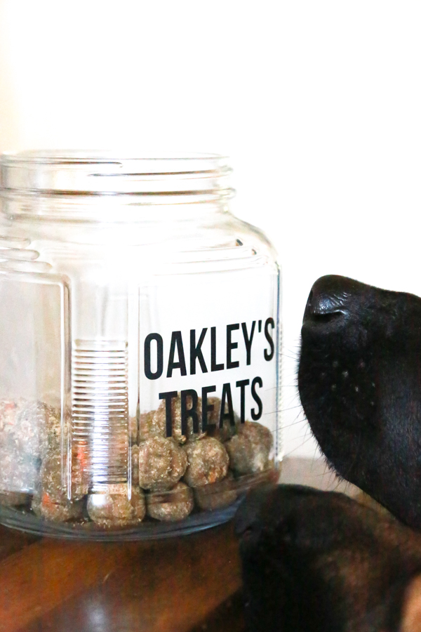 2 dogs noses sniffing some tasty smelling dog treats in a dog treat jar